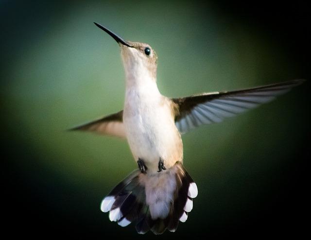 bird-246114_640