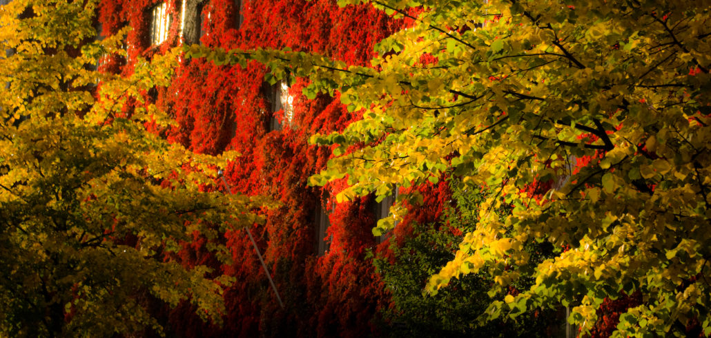Climbing wall plants in autumn colors