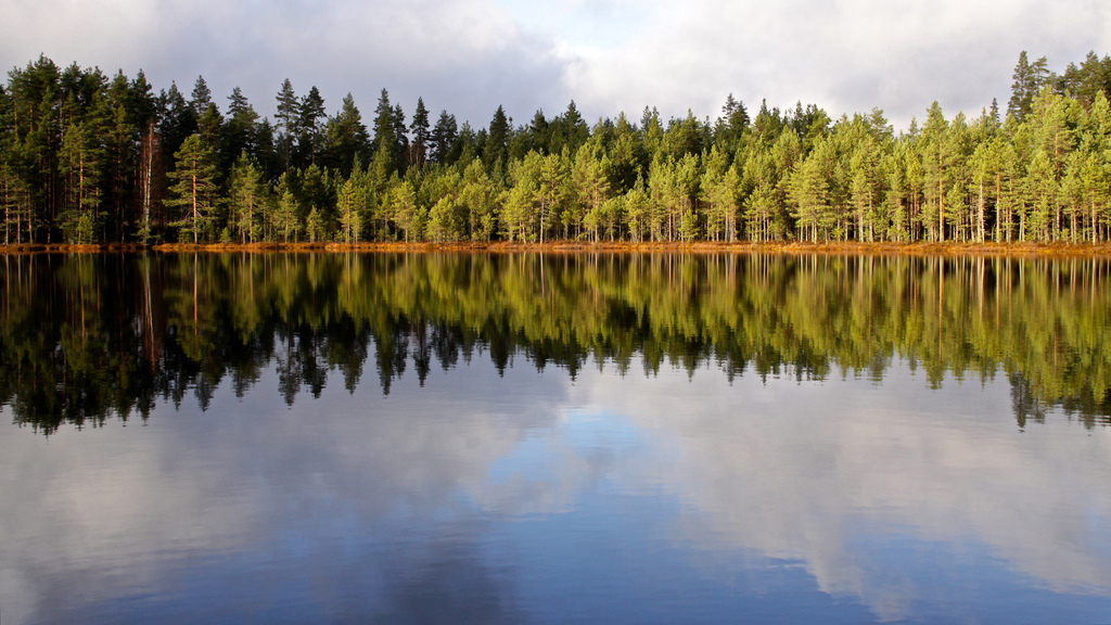 Finnish nature around a lake, in fall