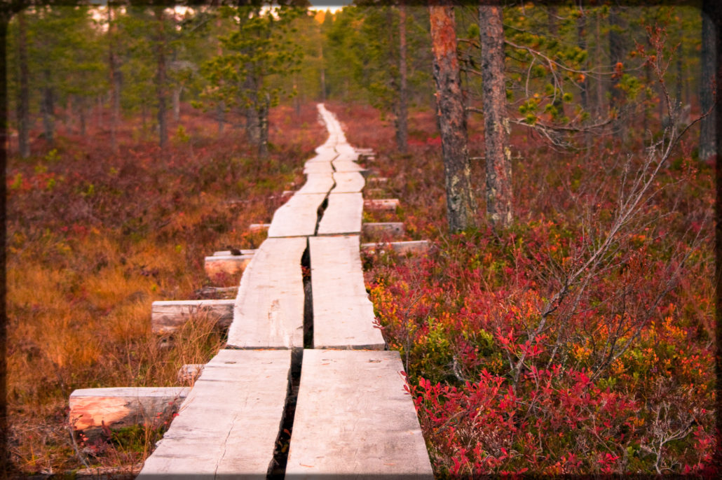 elevated path in Finnish autumn colored nature