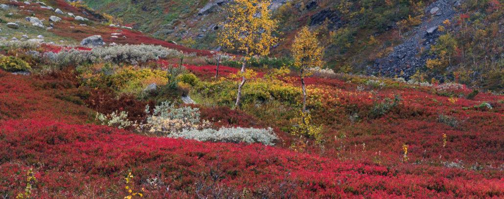 Finnish Ruska autumn colors