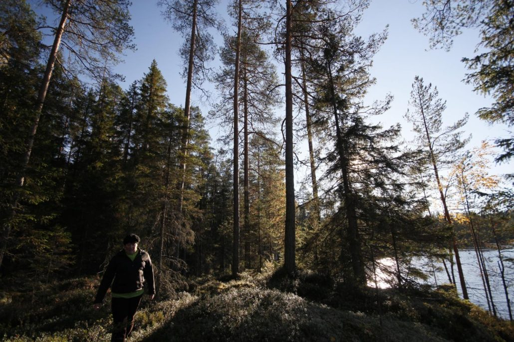 Woman walking in autumnal Finnish forest, by a lake