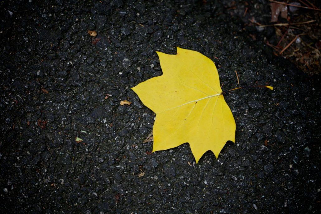 Yellow autumn leaf on the ground, photo by Tom Woodward