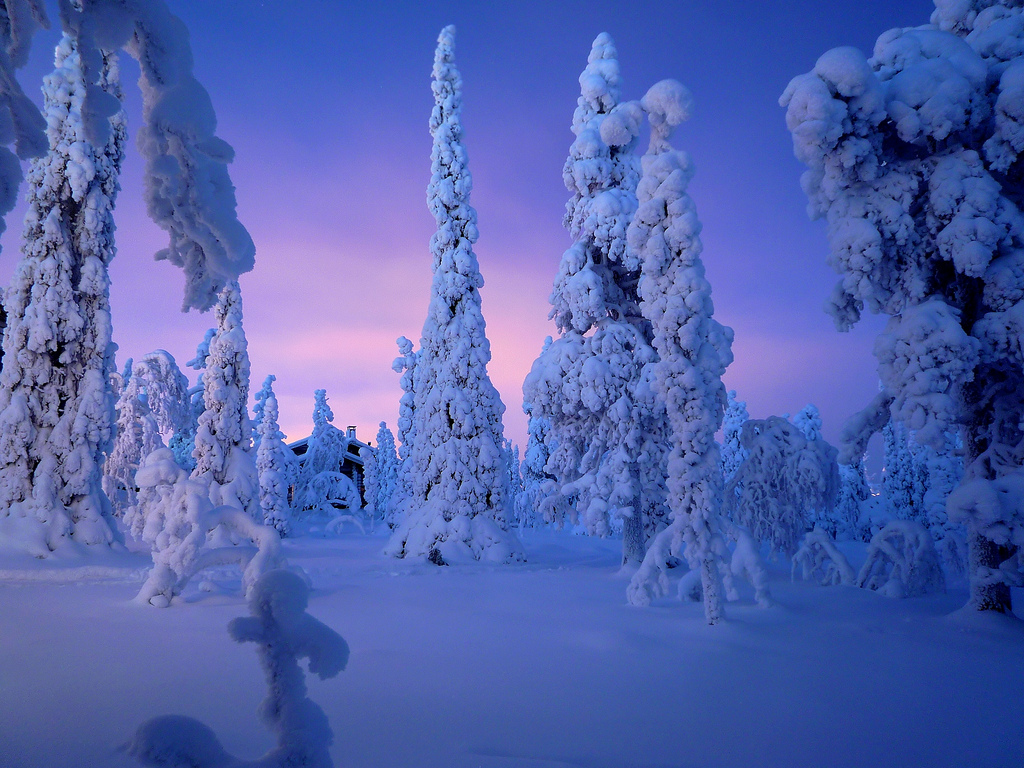 Finnish winter trees