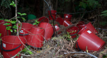 Red plastic buckets among growth in garden